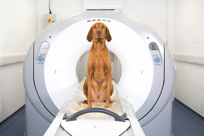 CT Scan for pets